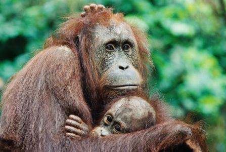 Borneo photo expedition | Johan Ernst Nilson